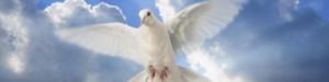 cropped-espiritu-00021.jpg